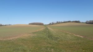 A ditch between two arable fields with buffers